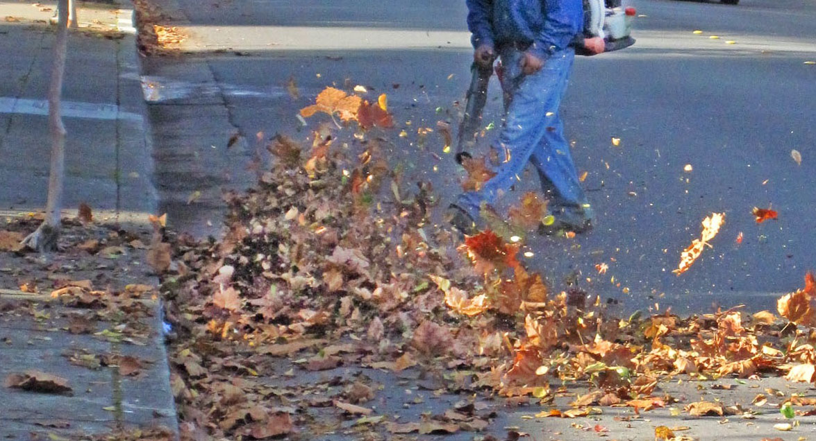 Leaf-Blower-Under-Scrutiny-712315